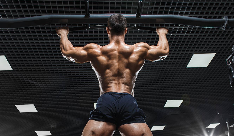 Wunderbar Rückenmuskulatur Diagramm Bilder - Menschliche Anatomie ...