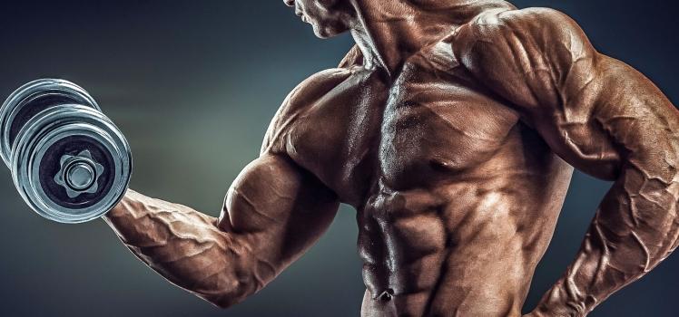Wie baue ich Muskeln auf?